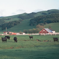 Tracking Pasture Health
